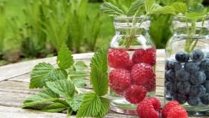 Frutos silvestres: Cómo Plantar Arándanos y Frambuesas en el Huerto