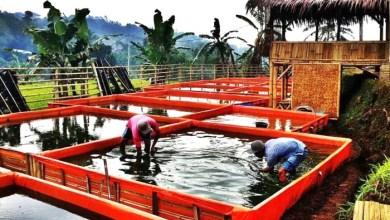 Photo of Kolam Terpal Sangat Efektif Untuk Budidaya Ternak Lele