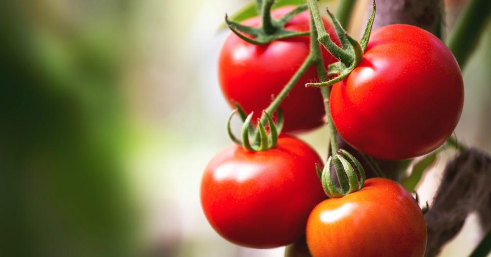Linea de nutrición vegetal Humic