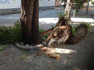 albero_caduto_via_amato_3