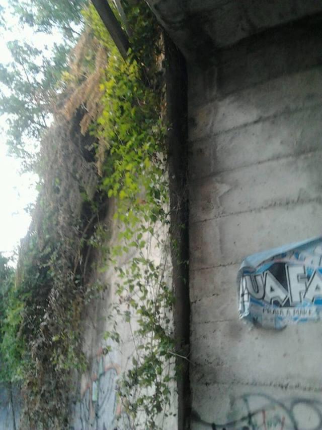 ponte 6
