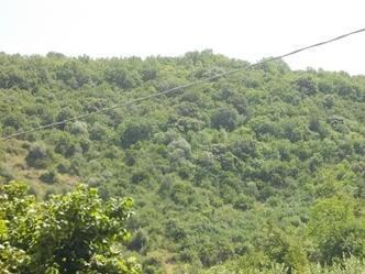 terreno_agricolo_in_vendita_battipaglia_sa_4060042489001935213