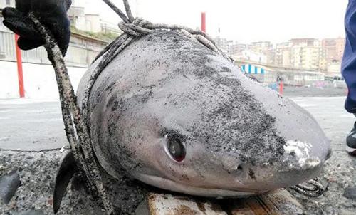 carcassa-squalo-tdg-750x422