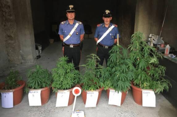 marijuana-1536x1152