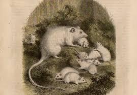 casa topi
