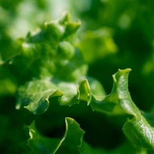 cultivar en contenedores