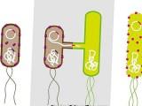 Los plásmidos, una nueva forma de rastrear la propagación de las enfermedades de las plantas