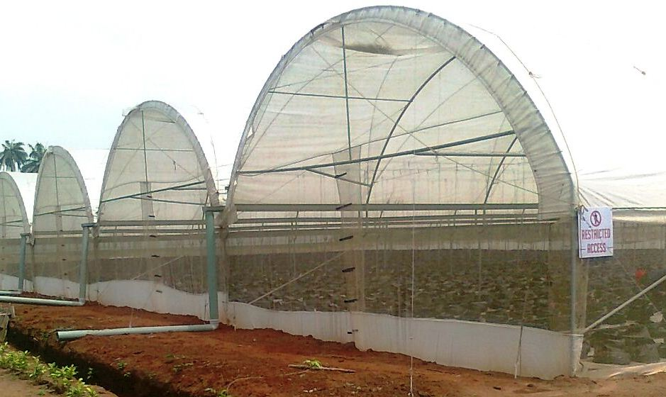 Greenhouse kit, Vegetable, Costs, Benefits,