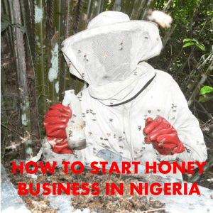 HOW TO START HONEY BUSINESS IN NIGERIA