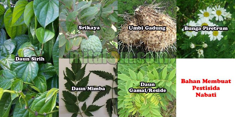Gambar-Tumbuhan-Bahan-Pestisida-Nabati-II