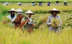 sapta-usaha-tani-kesejahteraan-petani