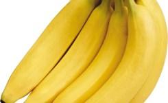Cavendish-Banana-Vertikal-1200