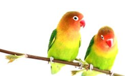 Burung Berbulu Indah