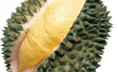 durian sunan