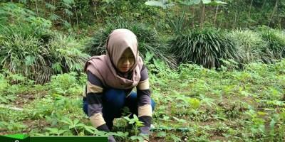 Langkah-langkah perencanaan agribisnis