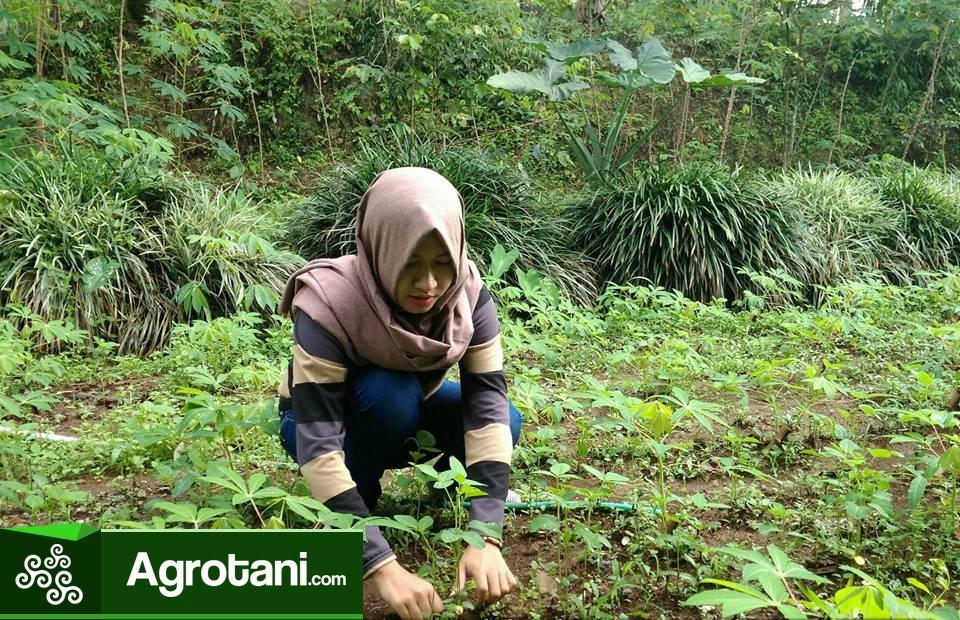Agribisnis Sistem