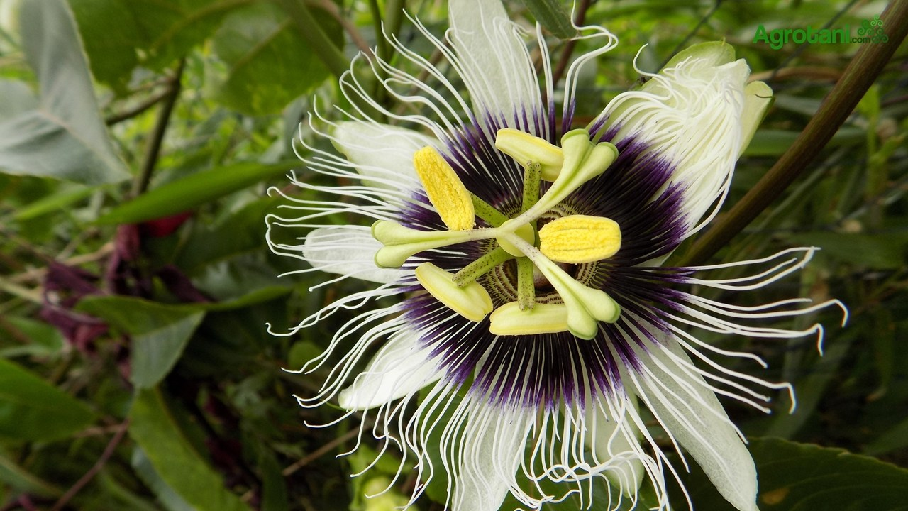 Pengertian klasifikasi tumbuhan menurut para ahli