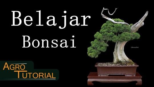 Cara menanam bonsai pemula dari awal sampai pemasaran