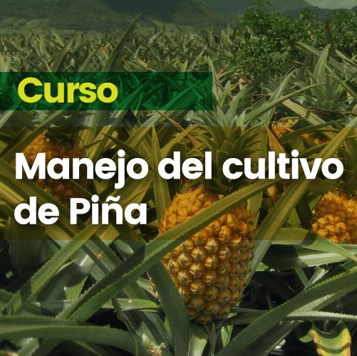 Curso manejo del cultivo de piña