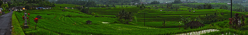 Bali_banner_Rice_terraces