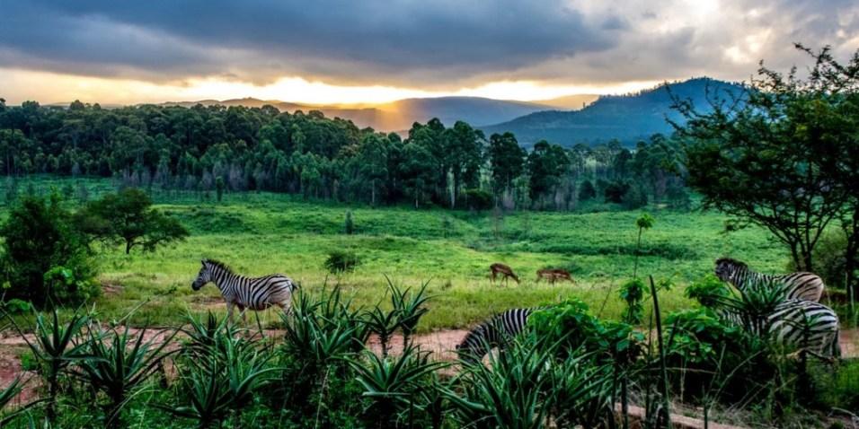 Swaziland Nature