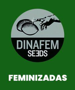 Dinafem FEM