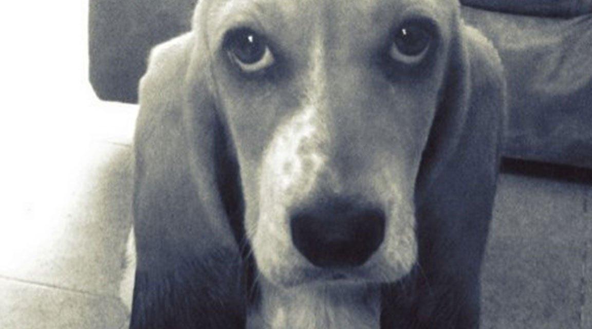 Vida exponencialmente temprana gracias a los llantos de un cachorro