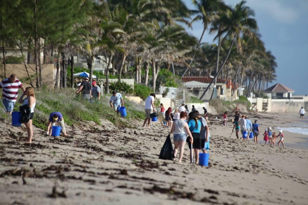 Adopt-The-Palm-Beaches-3