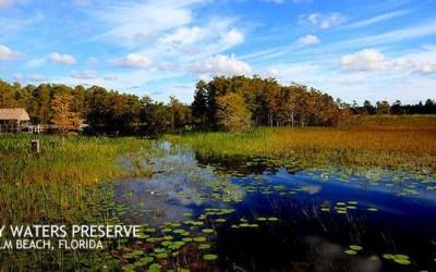 DNA Grassy Waters Field Trip