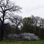 36-Dessau-Roßlau Dessau Fürst-Franz-Weg Waldgebiet Nordwestlich Luisium Blick Nordosten