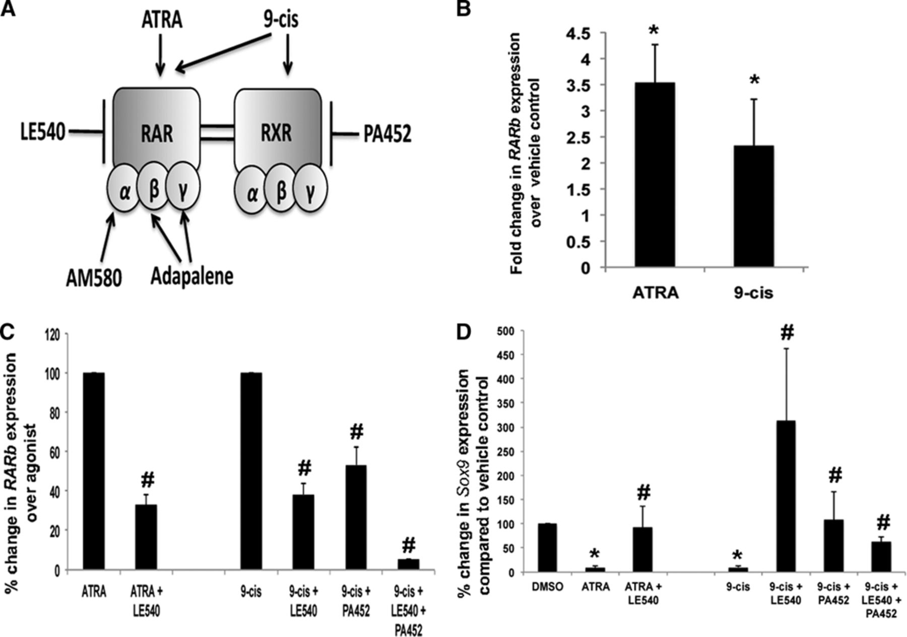 Increasedtary Intake Of Vitamin A Promotes Aortic