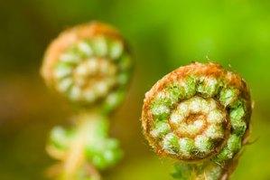 life in motion green fern spirals