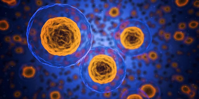 Adult Stem Cells: The Healing System Of The Body