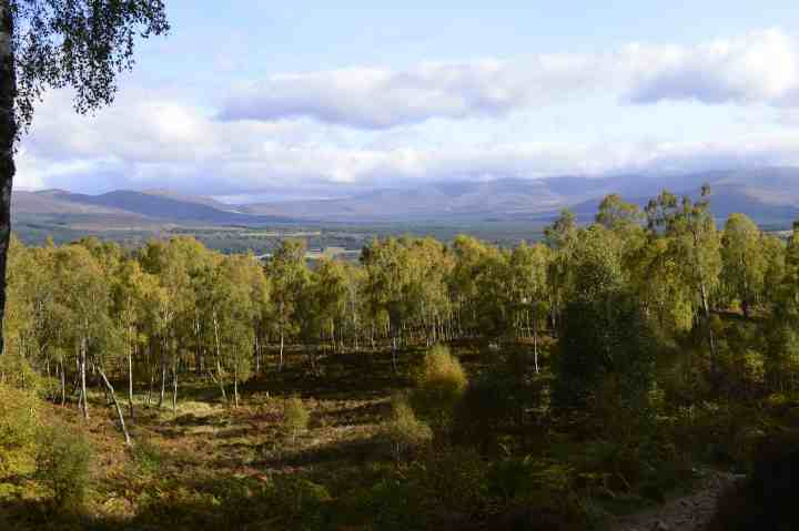Scotland's forests