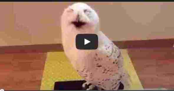 فيديو البوم الضاحك فظيع ومثير شاهد 15 ثانية