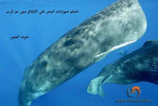 اضخم حيوانات البحر على الإطلاق صور عن قرب