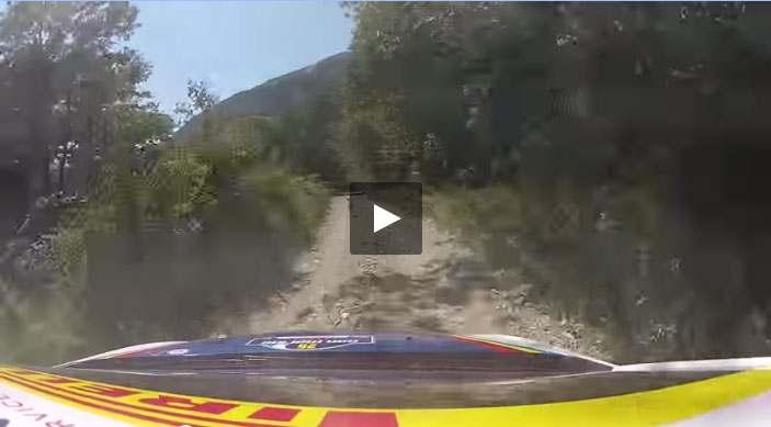 بالفيديو: غزال يسابق سيارة الرالي - أحلى عالم