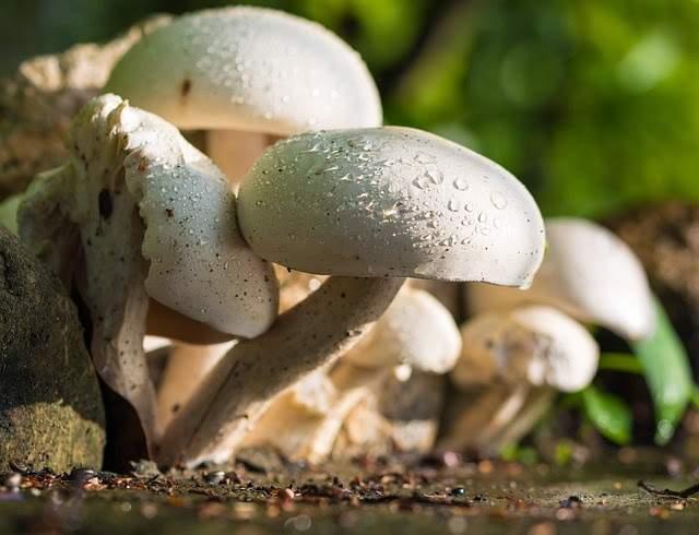 شاهد نمو الفطر عبر مجموعة من الصور تبين روعة الخلق