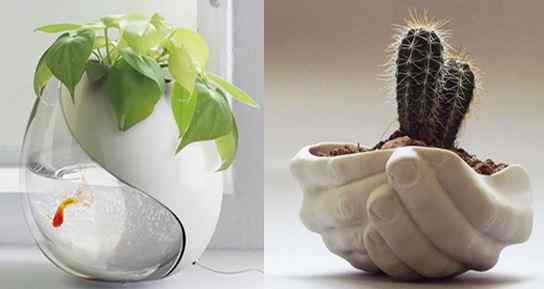 صور أوعية نباتات منزلية قمة في التميز و الابداع