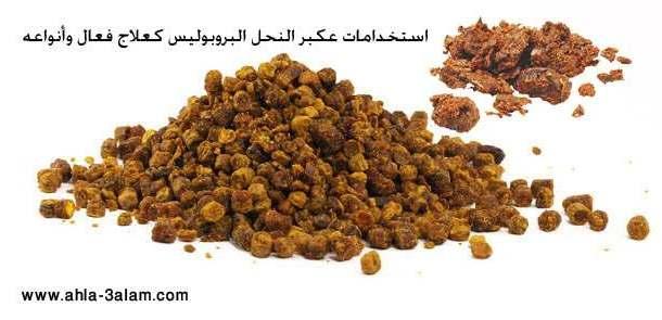عكبر النحل أو البروبوليس منتج النحل الدواء السحري استخداماته كعلاج فعال وأنواعه