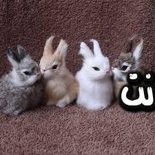 تفسير حلم الأرنب للعزباء والحامل والمتزوجة حلم الأرنب لابن