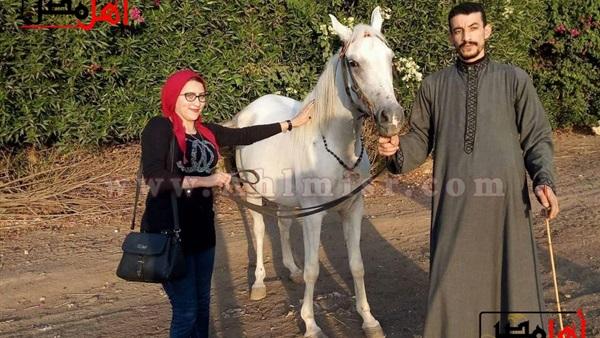 أهل مصر الخيول العربية الأصيلة صنع في الشرقية أهل مصر
