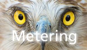 Eagle eyes - Metering
