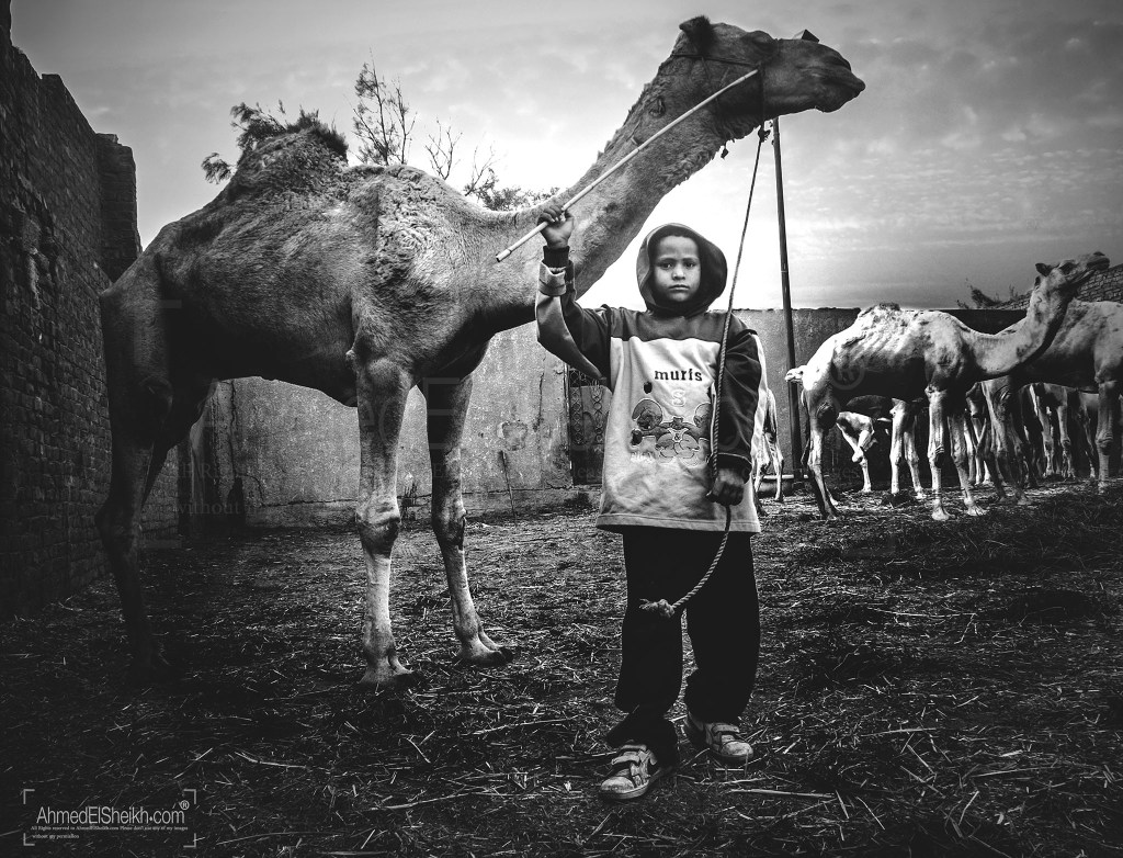 Young Seller in Camel Market