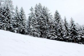 Winter14LOW