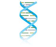 Inherited Genetic Diseases