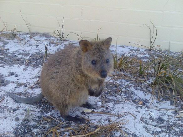 SevenAustralianIslands001