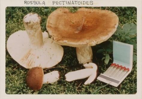fulford-mushroom-collector