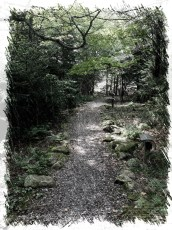 Nature_Portrait_Path_Back_to_Yurts
