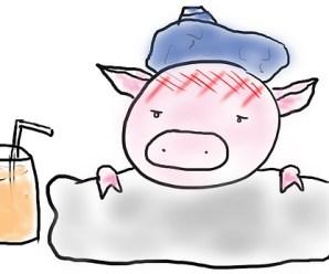 Gejala Flu Babi pada Manusia dan Babi Peliharaan